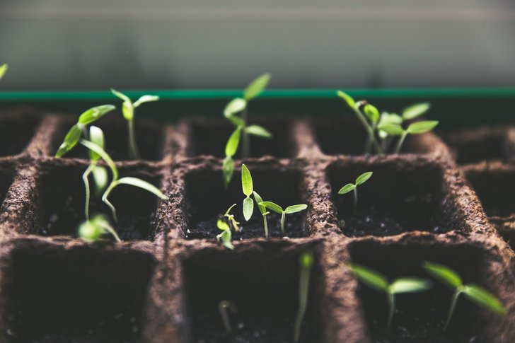 gardening-benefits-2
