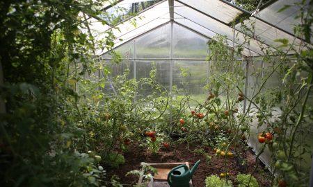 gardening-benefits-4
