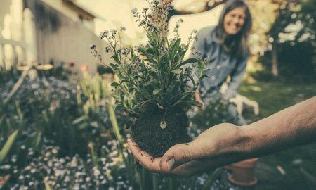 gardening-career-4